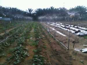 Pertanian di BRSABH